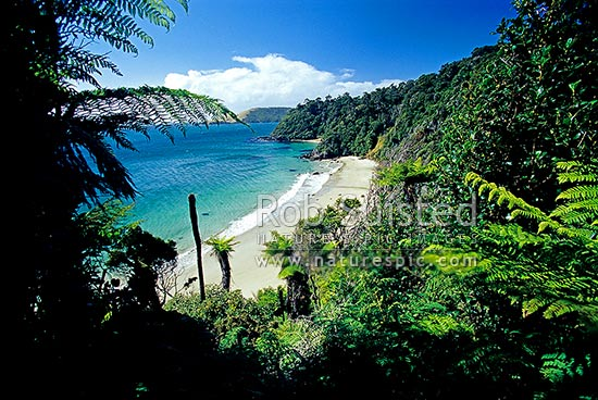 26421OP62: Maori Beach in Wooding Bay, Rakiura Great Walk track. Rakiura National Park, Stewart Island Dist., NZ