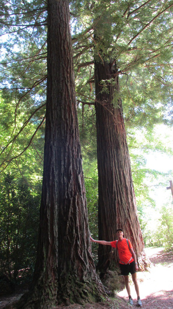 me and Redwoods